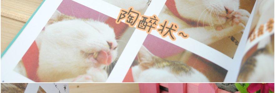 可爱猫咪老婆字体